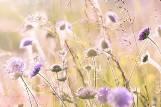 gite en Alsace au Bonhomme 68650 col des Bagenelles, deconnexion, relaxation, nature, écologie, méditation, éco-lieux