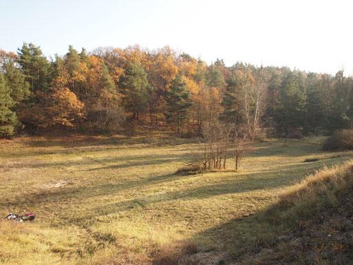 Eine Magerrasenwiese in den Krielower Bergen nach der Mahd (Foto: W. Ewert)