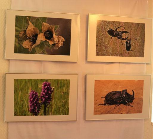 Ausschnitt der Foto-Ausstellung mit Messeler Fauna und Flora