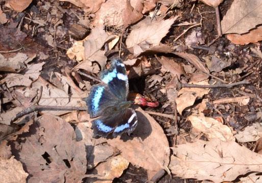 目の前に止まってくれた蝶々・・・名前不詳