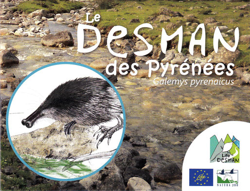 Le Desman des Pyrénées avec LIFE DESMAN-CEN LPO et ACCOB