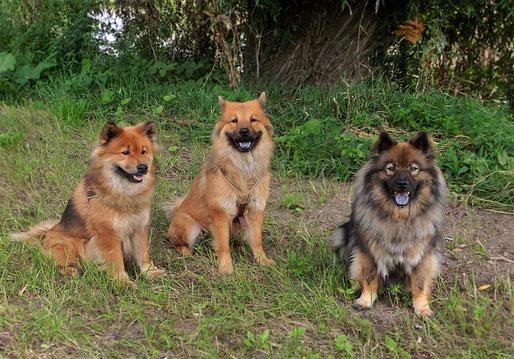 unsere 3 Mädels RONJA, BIA und YLVI  (September 2019)