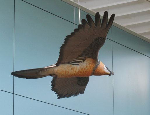 Gypaète barbu (Gypaetus barbatus - Bearded Vulture - Bartgeier - Quebrantahuesos) - x 1 - sculpture peinte - D.Rautureau - RTE Lyon-Jonage