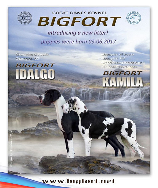 BIGFORT IDALGO x BIGFORT KAMILA