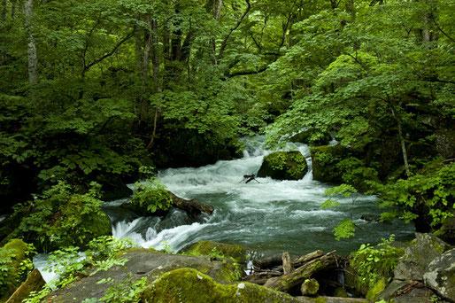 崖崩れがあり一周はできず奥入瀬渓流までの往復となった