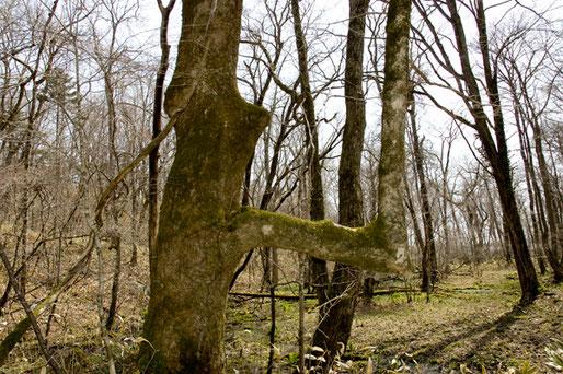 直角の枝の樹があった