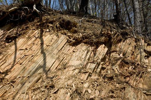 この石の崖はまるで木そのもののようです。木目のようなものまで入っています。階上でもここにしか無い珍しい石です。