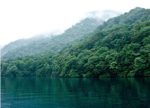 東北巨木調査研究会の会員も多く参加・参画している十和田湖ウォークが開催されました。つづきを見てください。感動の光景が見られます。