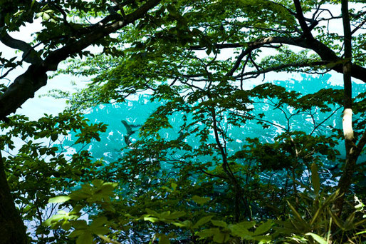 この瑠璃色の十和田湖は私たち皆んなで守っていかなければならない