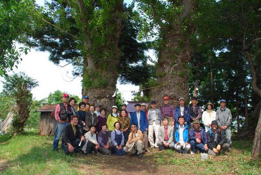 ポプラ(黒石市) 前列右端は新入会員の岩木登さん(写真家)、右から3人目がポプラの雄雌を同定していただいた、会員の弘前大学の石田教授