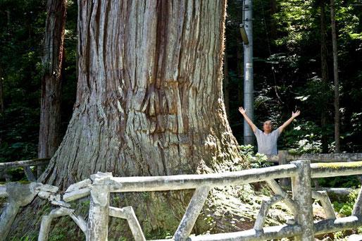 大湯で一番大きい杉の樹、鳥谷部さんも小さく見える
