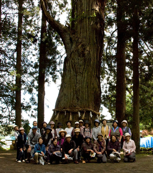 七崎神社の神の杉