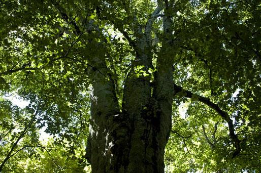 森の神には誰もいなかった。看板何とかなりませんかね、しょっちゅう聞かれます。