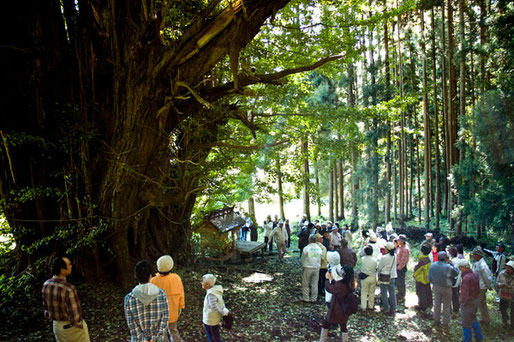 10月2日 十和田市全労済 巨木めぐり(会員 高渕・山本・鳥谷部、参加者80名)