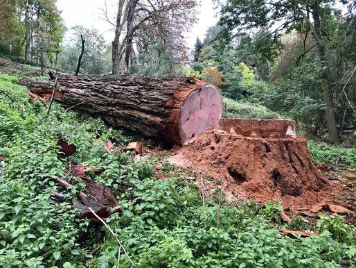 abattage arbre tarbes