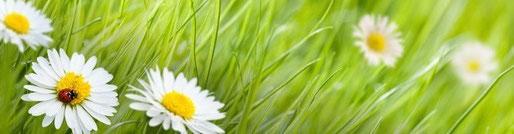 association-infloressens-vaires-sur-marne-paris-77-lahochi-pleine-conscience-reiki-cach-meditation-relaxation-bien-etre-stress