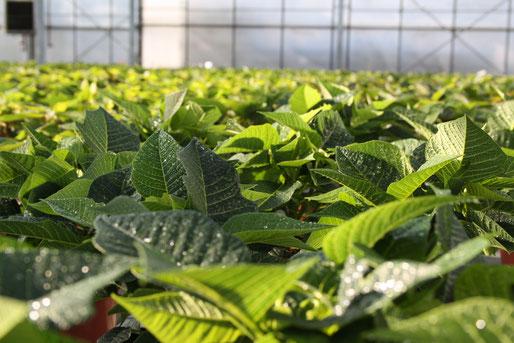 Ihre Zimmerpflanzen, Balkonpflanzen, Ihr Gemüse und die Beete in Ihrem Garten sollen wachsen und gedeihen.