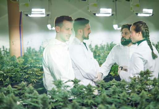 Geschäftsführer der Qualicann GmbH mit Labormantel und Schutzanzügen in CBD Hanf Plantage