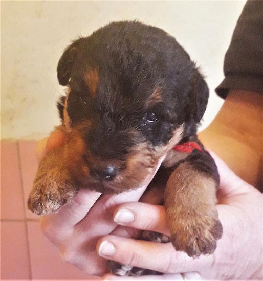 Dominico knapp 3 Wochen alt