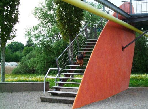 Eddy sprüht vor Lebensfreude, Treppe rauf - Treppe runter