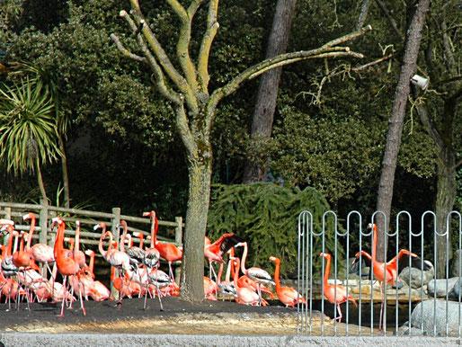 Zoo Palmyr , Charente Maritime