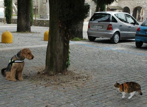 Grado ....komm ja nicht näher, ich hab Katzen zum Fressen gerne,.... ....ich könnte meine gute Erziehung vergessen !!!!