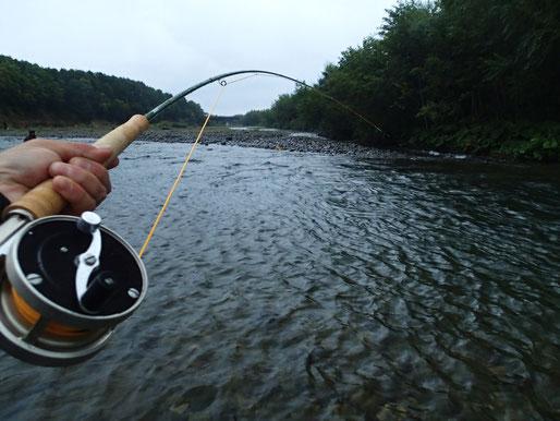 大西洋サケ釣りが好きだったスタンリーさんにあやかって、昨年の晩夏は道東の川のサケ釣りにも連れて行った。これぞ本懐とばかりにあたりに逆転音を響かせつつ、シロザケやカラフトマスに八面六臂(はちめんろっぴ)の働きぶりだった。