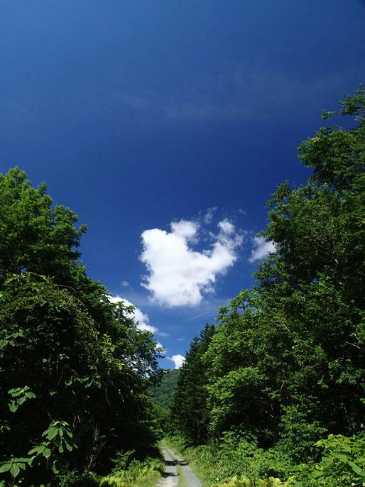 パキーンと晴れた空に浮かんだ雲を見、釣り人は夏が来たことを知る。