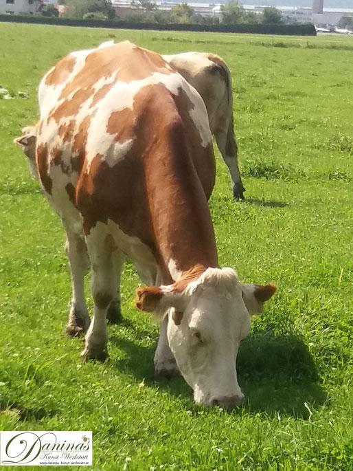 33 Tipps für mehr Nachhaltigkeit: Bio Fleisch statt Fleisch aus Massentierhaltung. Bio Bauern füttern kein Soja aus dem Regenwald.