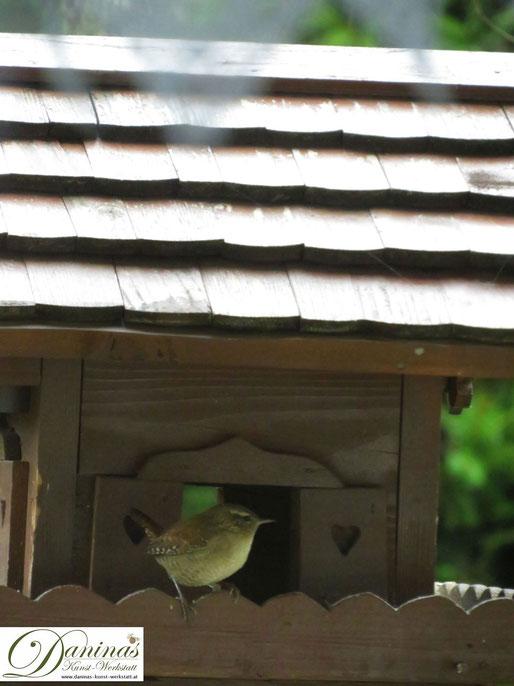 Einmaliger Gast am Vogelhäuschen: Kleiner Zaunkönig mit kurzem nach oben gerichtetetm Schwänzchen by Daninas-Kunst-Werkstatt.at