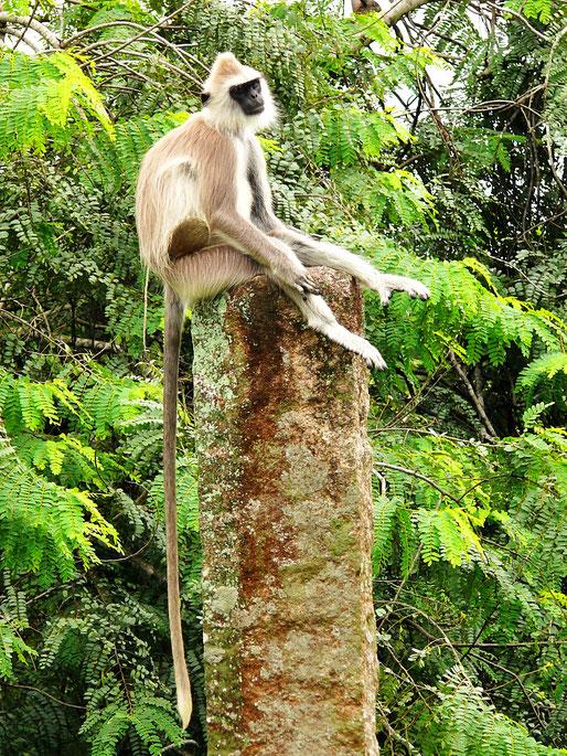 Spurenwechsler Reiseblog Reise TIP BLOG In der Spur Sri Lanka Polonnaruwa Schwarz Jörg Kultur Highlights