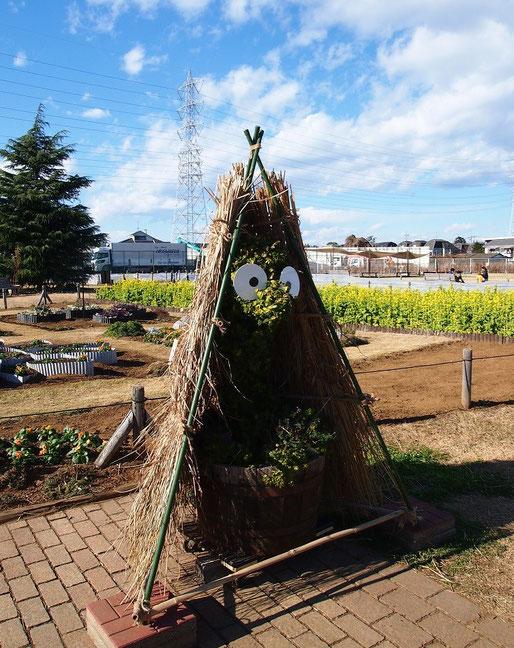 12月13日(2014) Poki(ポキ)と菜の花畑:三鷹市の花と緑の広場で出会ったオブジェ。ジブリ美術館オープンをきっかけにつくられた三鷹のキャラクター、ポキ(宮崎駿監督デザイン)がワラの中に隠れている。近くには菜の花畑が