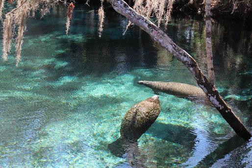 Blick von der Quelle ins Wasser