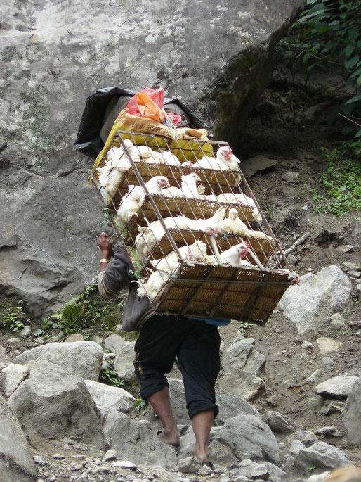 Der Hühnchenmann - Fleischtransport auf Nepalesisch