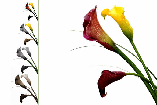 Fleurs 2012_010EMD