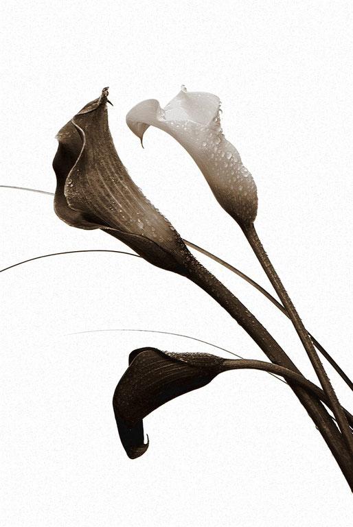 Fleurs 2012_008ED
