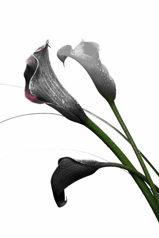 Fleurs 2012_007ED