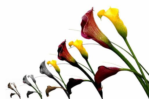 Fleurs 2012_009EMD