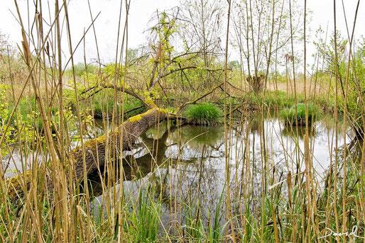 Totholz Naturschutzgebiet Petite Camargue Alsacienne