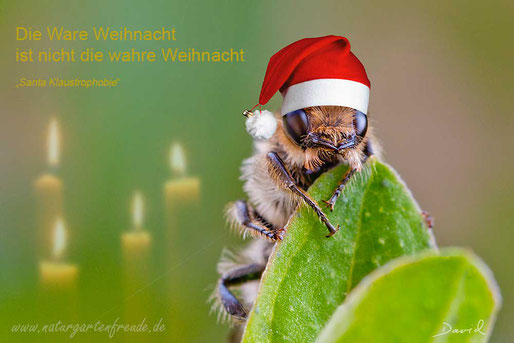 Fotomontage Wildbiene Weihnachten Nikolausmütze Wildbiene photomontage wildbee Christmas