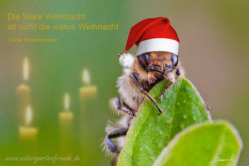 Fotomontage Wildbiene Weihnachten Nikolausmütze Wildbiene photomontage wildbee Christmas