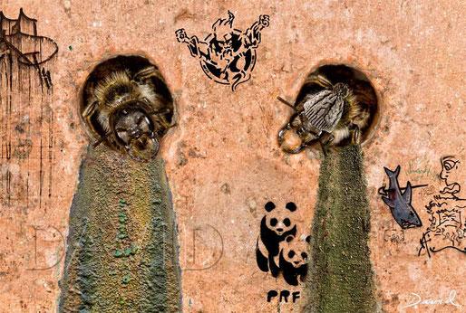 Fotomontage Wildbiene Nisthilfe Insektenhotel  photomontage wildbee insect hotel