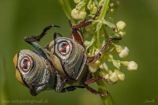 Fotomontage Käfer Paparazzi Fotoverbot  photomontage beetle ban on photography