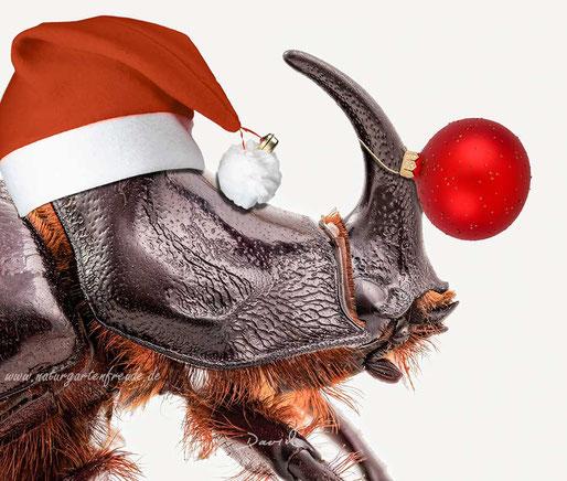 Fotomontage Nashornkäfer Weihnachten Nikolausmütze Christbaumkugel photomontage beetle Christmas