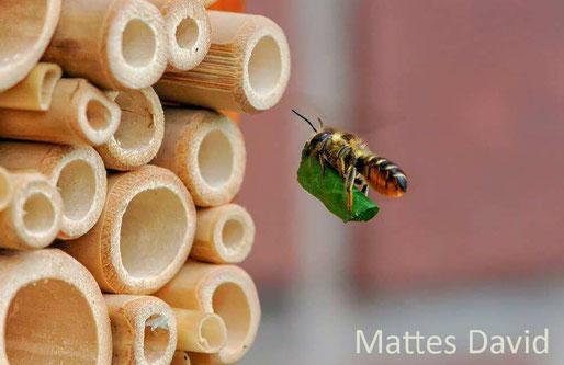 Insektenhotel Nisthilfen Insektennisthilfen Schilf Bambus Blattschneiderbieneinsect nesting aid insect hotel mason bee