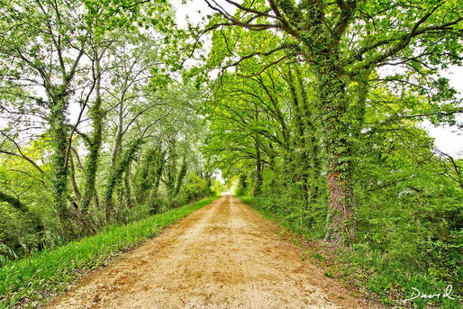 Efeu Eichen Allee Naturschutzgebiet Petite Camargue Alsacienne