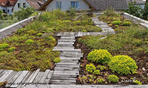 Natugarten Dachbegrünung Dachbepflanzung begrünte Dächer wildlife garden roof  greened roofs