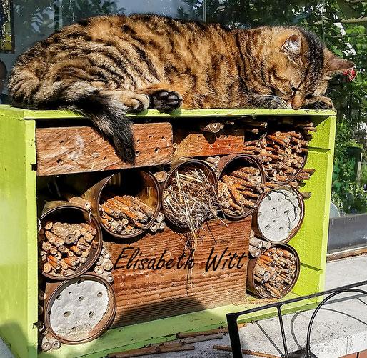 Nisthilfen Insektennisthilfen Insektenhotel Vogelschutz Specht Spechtschaden Aufgehackte Halme  bee hotel insect hotel Katze