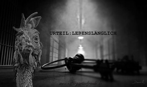 Fotomontage Gefängnis Batteriehuhn Massentierhaltung  photomontage battery hen jail lifelong