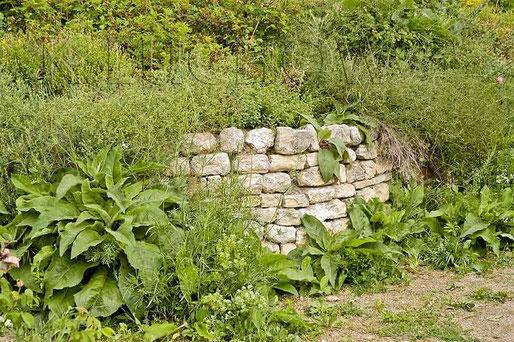 Beetbegrenzung    Trockenmauern Naturgarten www.naturgartenvielfalt.de dry wall stone dyke wildlife garden Kerstin Küchow native plants Königskerze Verbascum mullein